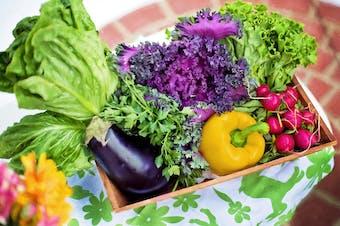 Harvest Feast Community Dinner