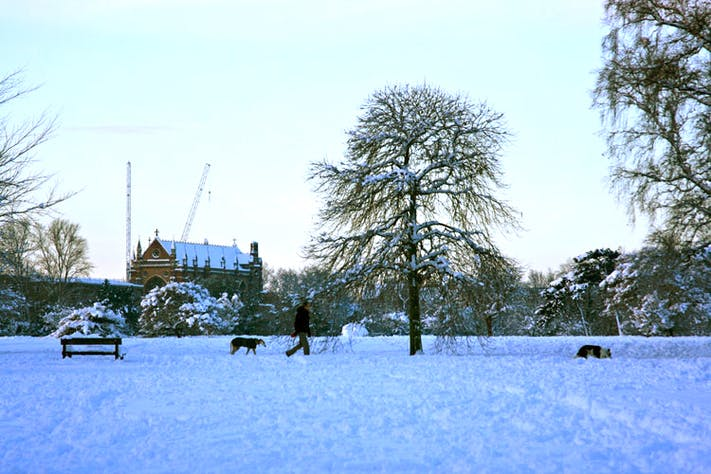 Dog Walking in University Parks by Ben Walker