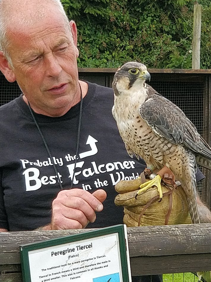 Clive and Peregrine Falcon